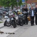 Ganz coole Entenfamilie trotz 157 Bikern.